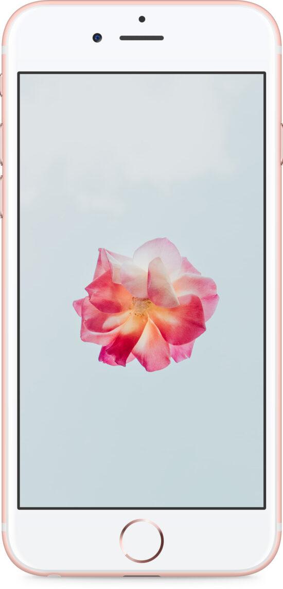 Apple iPhone 6s 32GB roségold Produktbild