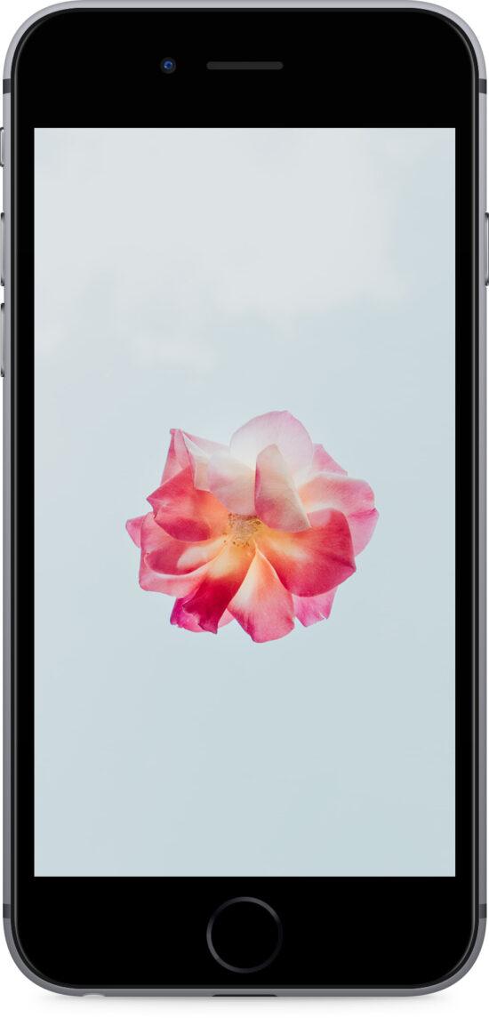 Apple iPhone 6s 32GB space grau Produktbild